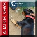 Cachorro preso com a quadrilha Bonde dos 13 B13.jpg
